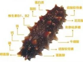 海参这样吃营养会翻倍,原来海参有这么多好处!