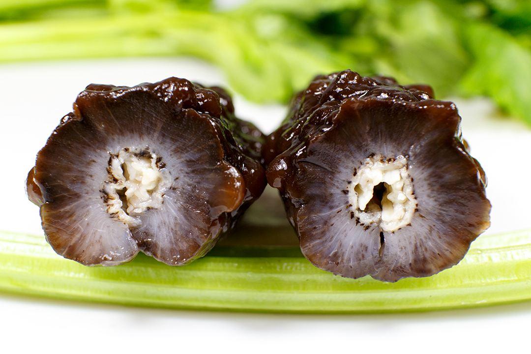 球参-巴西四方参-西沙群海参的简介和区别常用海参品种介绍