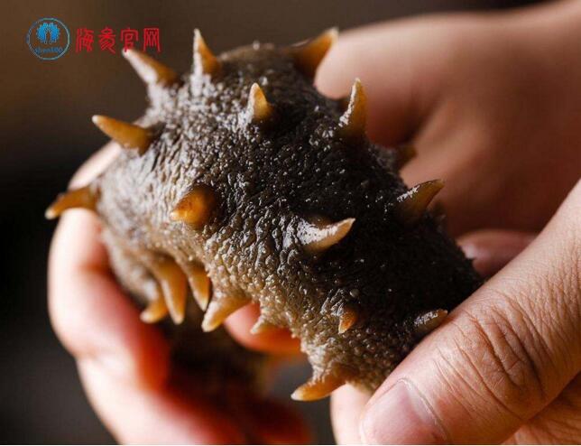 海参的营养价值及食疗功效