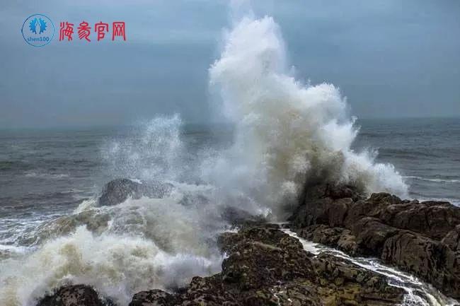 """台风""""利奇马""""过后,海参养殖受影响,价格或再迎上涨"""