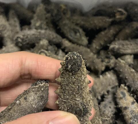 【视频鉴别】教你一招怎么鉴别海参品质好坏,看沙嘴也是一个判断标准