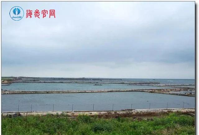 【海参案例分享】实战分析1600元1斤的干海参究竟啥品质