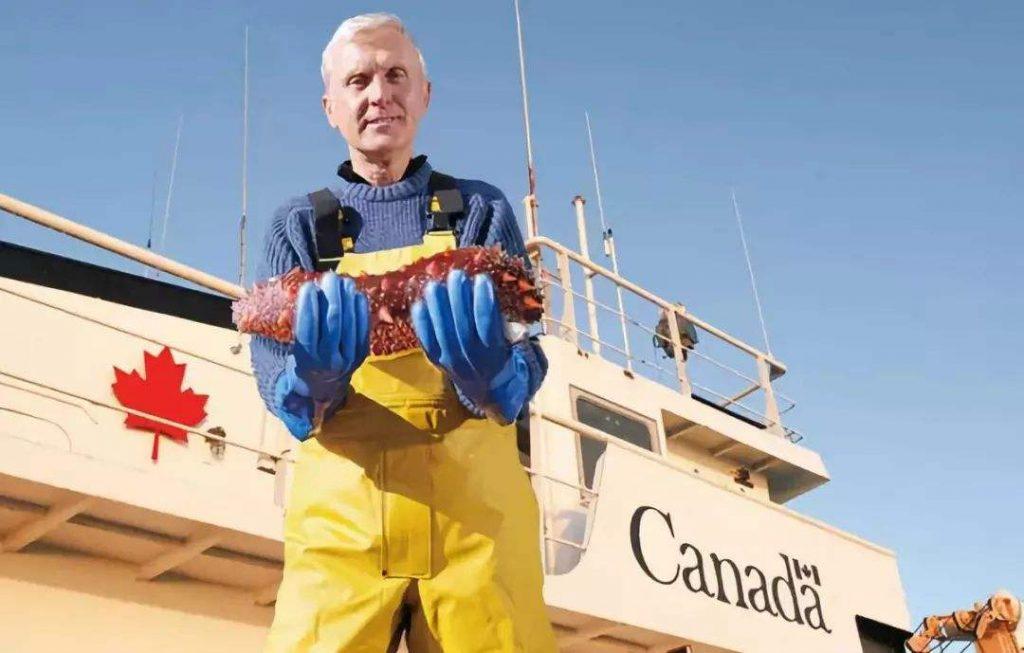 加拿大海参与我国刺参对比